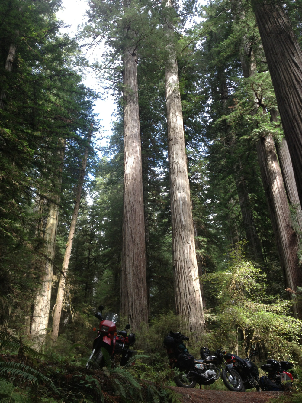 bikes-trees